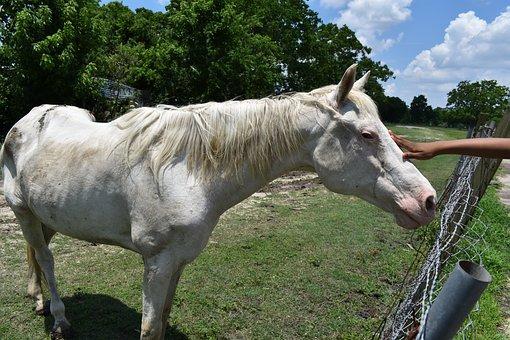 Vårda sjuka eller skadade hästar
