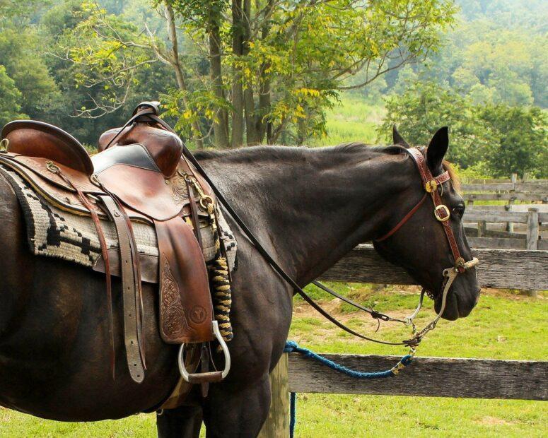 Vilken utrustning krävs för att ha häst?