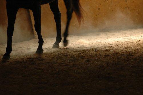 Transportera häst och tillbehör